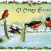 ACHR1050_christmas-song-birds_900px
